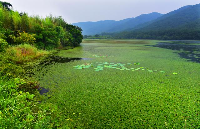 전북 고창군 아산면 운곡리 일원에 있는 운곡습지. 이곳은 유네스코 생물권보전지역으로 지정됐다