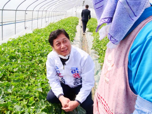 30일 오전 김현기 무소속 후보가 경북 성주군 대가면 한 참외 농가를 방문해 농민과 이야기를 나누고 있다. 이남영 기자