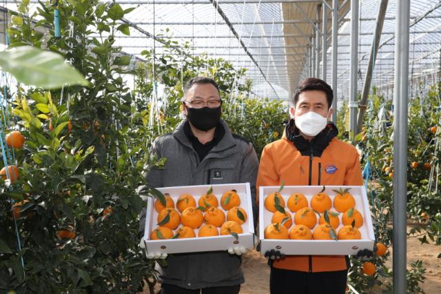경북 포항시 북구 한농장에서 올해 수확한 한라봉을 재배 농민 한치용(왼쪽)씨와 이강덕 포항시장이 선보이고 있다. 포항시 제공
