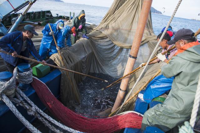 경남 통영 욕지도 남방 청정해역에서 기선권현망 어선들이 멸치를 잡아 올리고 있다.