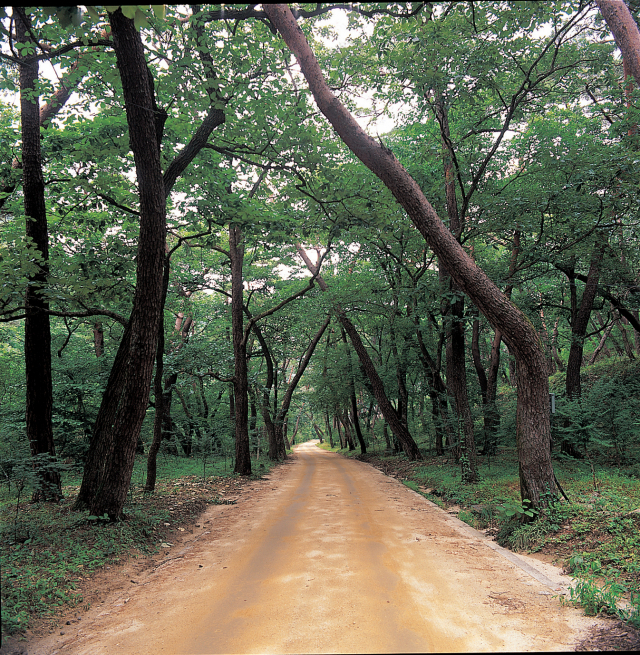 고운사 천년숲길