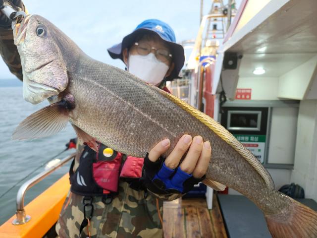 대구에서 민어 낚시를 온 이치복씨가 자신이 잡은 72 cm 크기의 민어를 들어보이고 있다.
