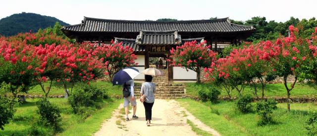 배롱나무 꽃이 붉게 흐드러진 길을 따라 병산서원으로 들어서는 관광객