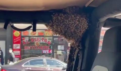 [영상]고작 10분 만에 벌들에게 점령당한 차량