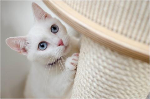 [박순석의 동물병원 24시 ] 반려동물 건강과 행동 상담 Q&A