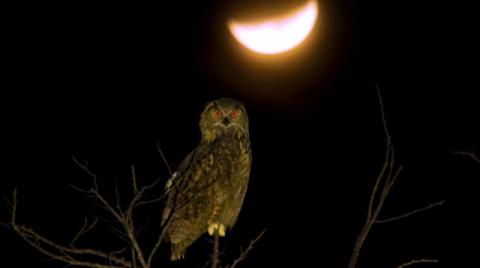 [TV] 어두운 밤을 지배하는 야생 포식자의 생태계