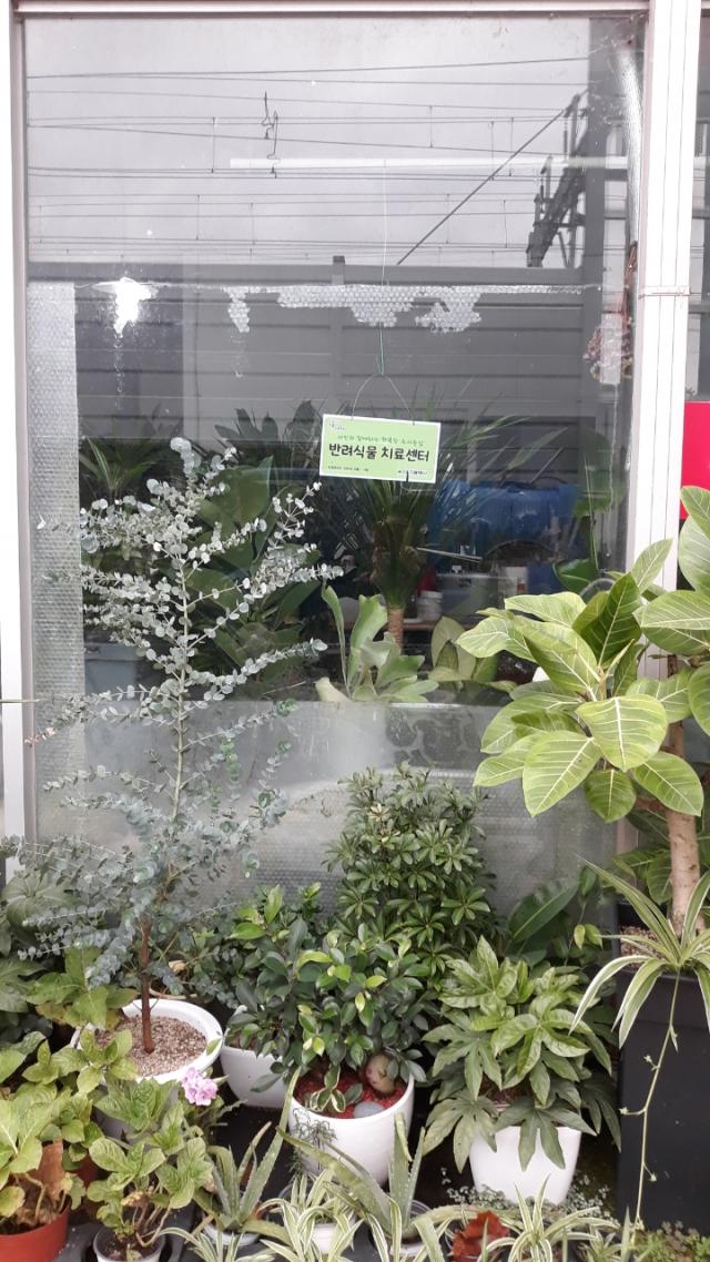 반려식물 치료센터 모습. 대구시 제공